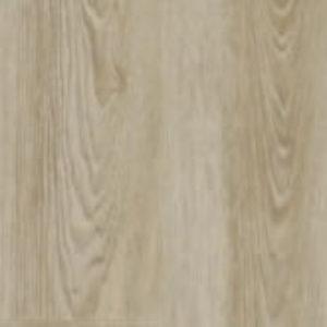 Scarlet Oak 50230