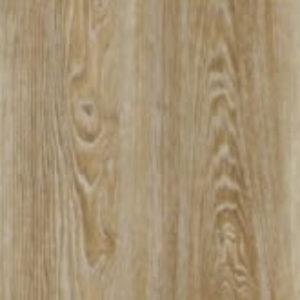 Scarlet Oak 50274