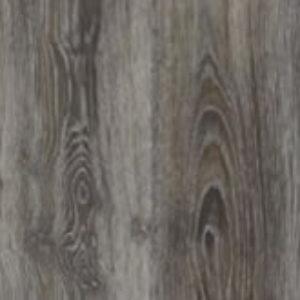 Scarlet Oak 50860