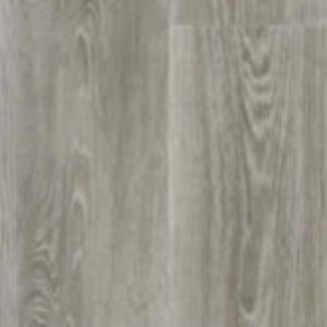 Scarlet Oak 50915